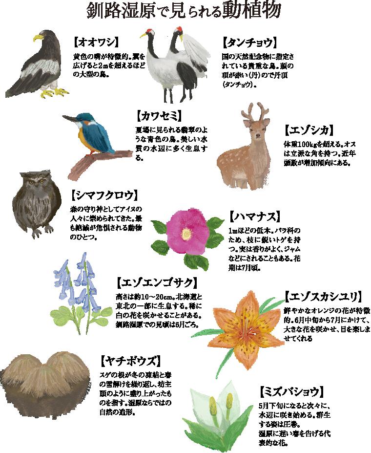 釧路湿原で見られる動植物~オオワシ、タンチョウ、カワセミ、エゾシカ、シマフクロウ、ハマナス、エゾエンゴサク、エゾスカシユリ、ヤチボウズ、ミズバショウ