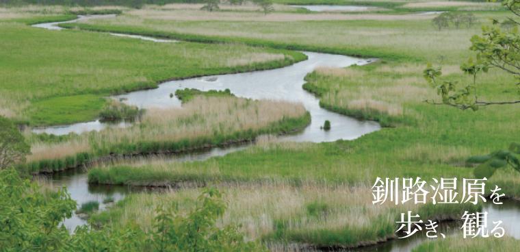釧路観光情報~湿原