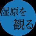 釧路観光情報~湿原を見る